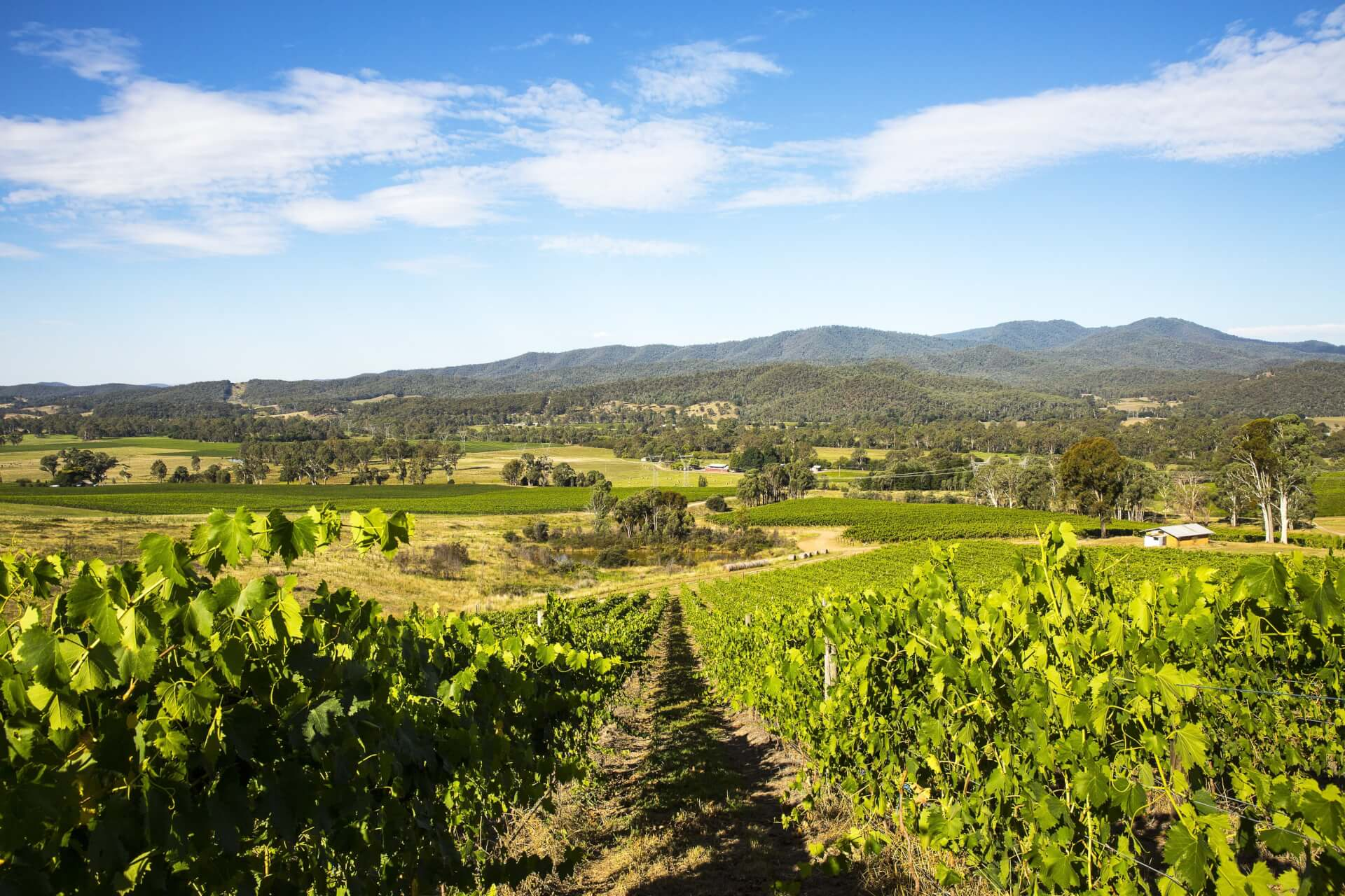 High Country Vineyard views from Pizzini Wines