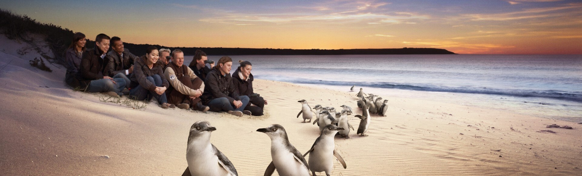 Melbourne Private Tours Philip Island Trip to Penguin Parade