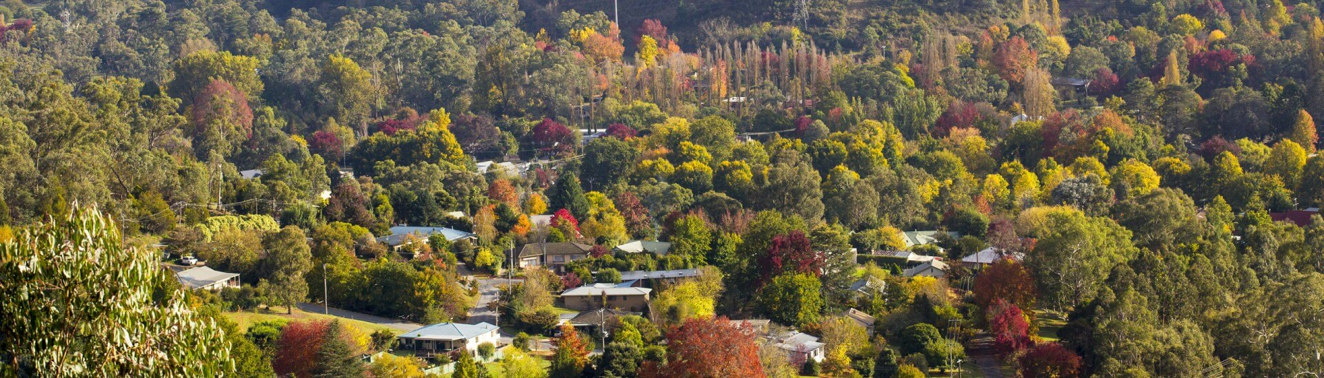 Spectacular Autumn Bright and High Country Tours