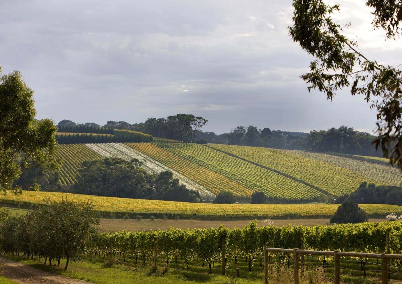 Melbourne Private Tours Mornington Peninsula Tour Wine Tours Mornington Peninsula