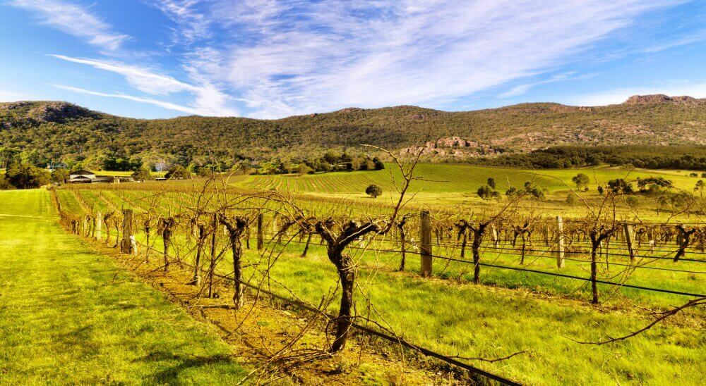 Grampians wine tours - Vineyards in the Grampians Victoria