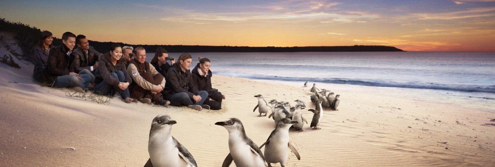 Philip Island Trip - Penguin Parade
