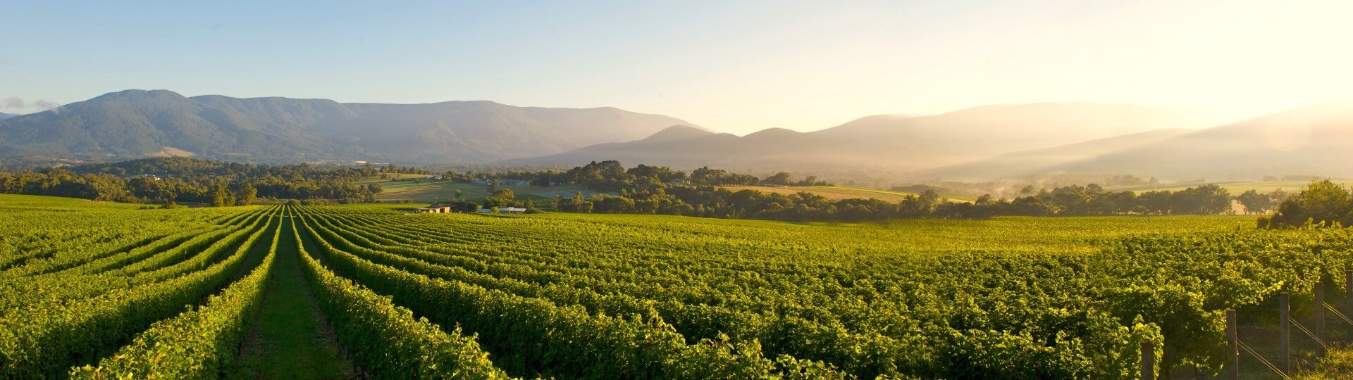 Wineries and wine tours Victoria