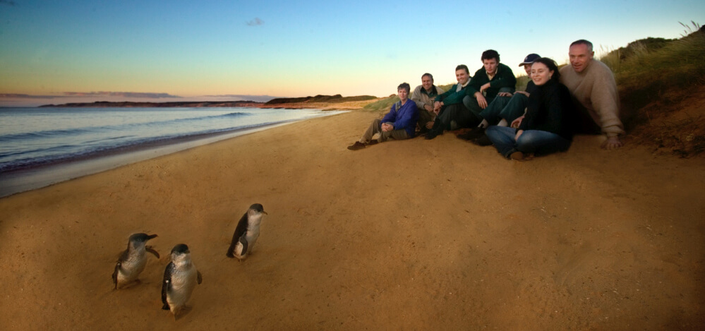 Melbourne Private Tours Explore Phillip Island on the private tour along with Motorbike event