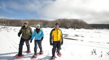 Snowfields