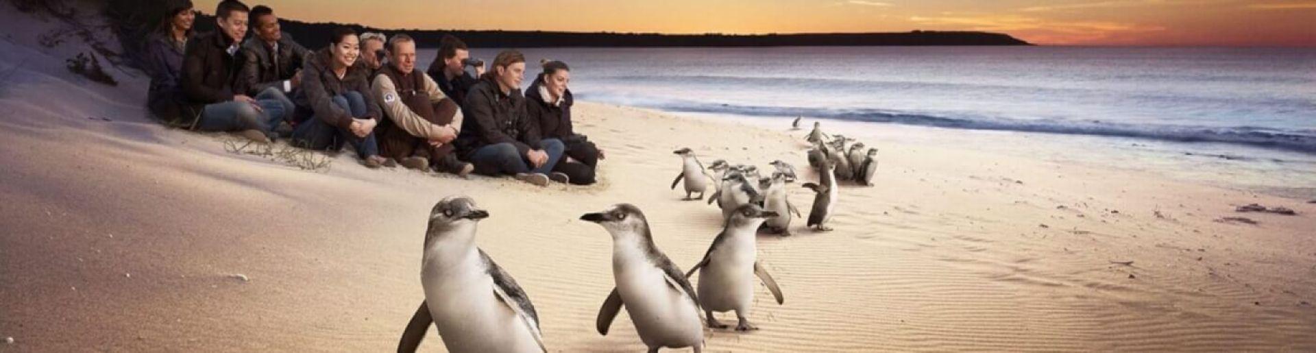 Phillip Island Tour