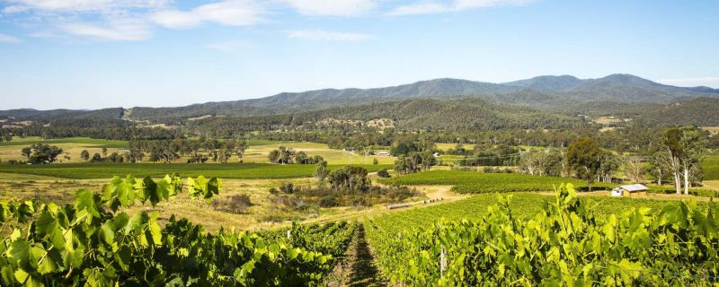 Victoria's Wine Regions Revealed